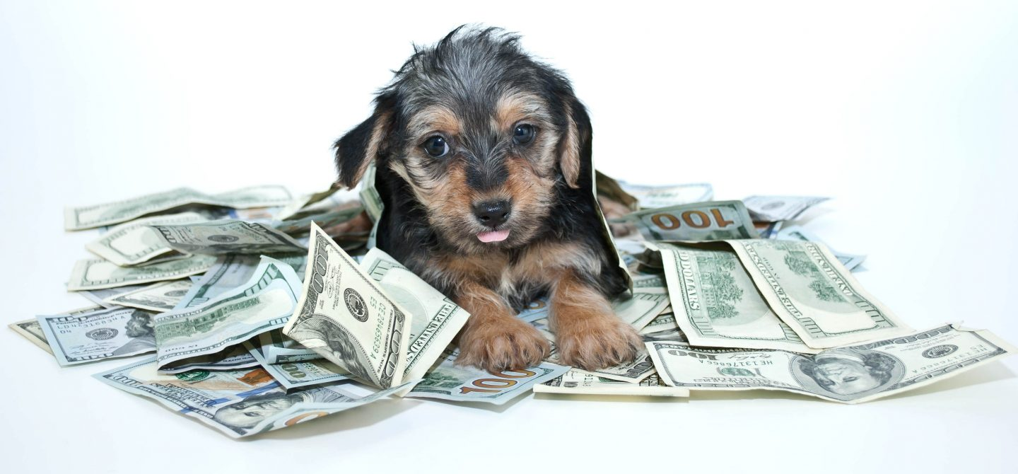 11 Pet Names for Finance Fans | FINRA org